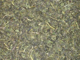 Sencha Green Mint